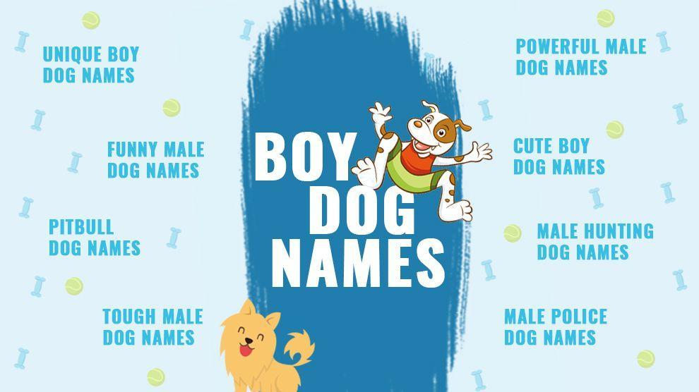 2020 Best Boy Dog Names Backed With Complete Meanings Petmoo