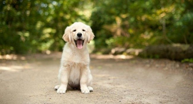8 Budget Friendly Dog Breeds In India Dogspot In